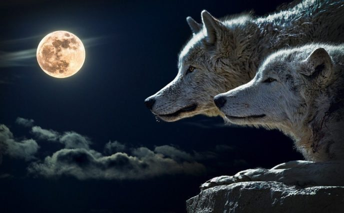 Dealing With Anger - The Story of Two Wolves